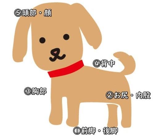 シャンプーで犬を洗う手順のイラスト
