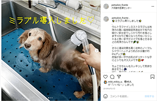 動物病院で犬がミラブルで洗われている